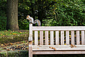 'Squirrel eating a nut while perched on a wooden bench; Gateshead, Tyne and Wear, England'