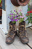 Hiking boots with flowers planted in them, Seldovia, Southcentral Alaska, Summer