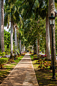 'Path lined with palm trees and lamp posts; Playa del Carman, Quintana Roo, Mexico'