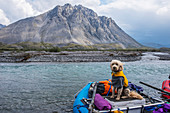 Golden doodle sits in a raft along the Marsh Fork of the Canning River in the Arctic National Wildlife Refuge, Summer, Alaska
