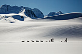 Summer tourists on dog sledding tour on Colony Glacier in the Chugach Mountains, Southcentral Alaska, summer