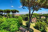 Colosseum, Palatine hill, Forum romanum, Rome, Latium, Italy