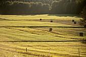 back lit hay bales at domain, Alb plateau around Rutschen rock, Bad Urach, Reutlingen district, Swabian Alb, Baden-Wuerttemberg, Germany