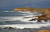 Pacific coast at Bodega Bay , Bodega Head , Pacific Ocean , Sonoma , California , U.S.A. , America