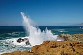 Pacific coast at Bodega Bay , Surf , Pacific Ocean , Sonoma , HWY.1 , California , U.S.A. , America