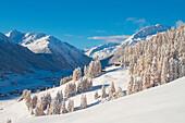 White winter landscape in Livigno. Valtellina - Lombardy - italian Alps