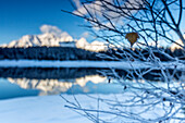 Branches covered with frost around Lake Pal?? where the snowy peaks and woods are reflected Malenco Valley Lombardy Italy Europe