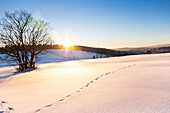 Winter landscape at sunset, tracks in the snow, new fallen snow, mountains, forest, Harz, Sankt Andreasberg, Lower Saxony, Germany