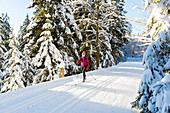 Women skiing in winter forest, cross-country skiing in a winter landscape, fir trees covered with snow, mountains, Harz, MR, Sankt Andreasberg, Lower Saxony, Germany