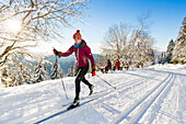 Women skiing in winter forest, cross-country skiing, fir trees covered with snow, mountains, dusk, winter sport, Ski area, Harz, MR, Sankt Andreasberg, Lower Saxony, Germany
