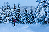 Women skiing in a winter forest, cross-country skiing at full moon, winter landscape, fir trees covered with snow, winter sport, Harz, MR, Sankt Andreasberg, Lower Saxony, Germany