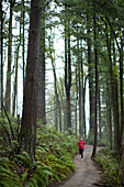 A woman running a trail in Forest Park.  Portland, Oregon.