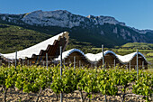 Ysios winery in Laguardia, Rioja alavesa, Basque Country, Spain.