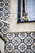 Cat in a window in Alfama district in Lisbon Portugal.