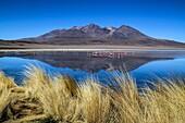 Reflecting the spectacular Laguna Azul, around the Uyuni Salt Flats, Bolivia