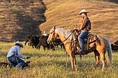 Two wranglers (cowboys) taking care of cattle, California, USA.