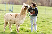 Young woman walking an alpaca on a lead.