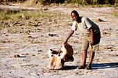 Botswana, North-west district, Chobe National Park, Savuti arid region, elephant skull