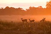 Botswana, North-west district, Chobe National Park, Savuti arid region