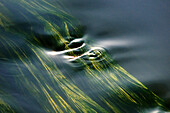 France, Indre et Loire, The River Cher, algae