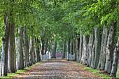 Avenue to Rosenholm Castle near Aarhus, Middle Jutland, Jutland, Cimbrian Peninsula, Denmark, Northern Europe