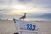 A seagull sitting on a beach chair. Dierhagen, Darß Mecklenburg-Vorpommern, Germany