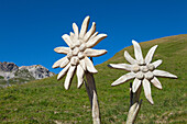 Wooden sculpture edelweiss at Nebelhorn, near Oberstdorf, Allgaeu Alps, Allgaeu, Bavaria, Germany