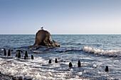 Seagull sitting on rocks, Jasmund national park, Ruegen, Baltic Sea, Mecklenburg-West Pomerania, Germany