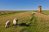 Sheep at the dyke, Pilsum lighthouse, near Greetsiel, East Friesland, Lower Saxony, Germany