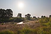 """Moor in Nature reserve """"Ewiges Meer"""", East Friesland, Lower Saxony, Germany"""