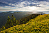 View from Belchen over the range of hills, Black Forest, Baden-Wuerttemberg, Germany
