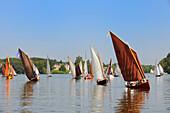 France, Loire Atlantique, Nantes, Suce sur Erdre, Erdre River at the level of Chateau de Nay, Rencontres de Yachting et Canotage - Les Rendez-vous de l'Erdre, old sailboats contest