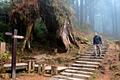 Taiwan, Chiayi District, Alishan National Scenic Area, Altitude Forest