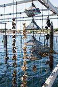 Hanging oysters, Étang de Thau, Bouzigues, Mediterranean Sea, Hérault, Languedoc Roussillon, France