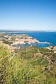 View over Collioure and its vineyards, Côte Vermeille, Mediterranean Sea, Pyrénées Orientales, Occitanie, Languedoc Roussillon, France