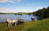 France, Nievre, Lake Pannecière, Alain Perruchot farmer and horse breeder in command of its coupling