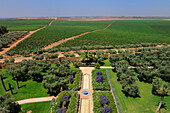 Morocco, Meknes Tafilalet Region, near Meknes, Boufakrane, Les Celliers de Meknes exploting vineyard