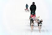 Schweden, Grafschaft Norrbotten, Lappland, Abisko, Wanderweg Kungsleden, Schlittenhunde-Tour