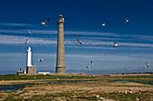 Frankreich, Finistère, Lilia, Leuchtturm Ile Vierge (Virgin Island) auf dem Meer am Ausgang des Aber Wrac'h