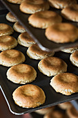 France, Pyrenees Atlantiques, Saint Jean de Luz, cooking macaroons of Maison Adam Confectioner's, macaroons plates removed out of the owen