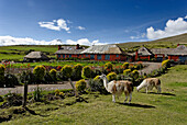 Ecuador, province de Cotopaxi, Andes, Cotopaxi National Park, Hacienda El Porvenir, at the bottom of Cotopaxi volcano, the farm proposes horse rides lasting a few days with Chagras as guides