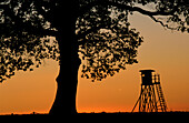Silhouette of a stance, Staatsdomaene Beberbeck, Reinhardswald, North Hesse, Germany