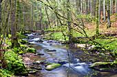 Schondra Stream, Rhoen Biosphere Reserve, Bavarian Rhoen Nature Park, Bavaria, Germany