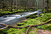 Creek of the Schondra, Rhoen Biosphere Reserve, Bavarian Rhoen Nature Park, Bavaria, Germany