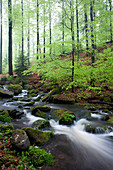 Creek of the Disbach, Rhoen Biosphere Reserve, Bavarian Rhoen Nature Park, Bavaria, Germany