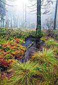 Highmoor submontane of the Brocken peak, Harz National Park, Saxony-Anhalt, Germany