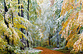 Onset of Winter, Stadtwald Wuerzburg, Wuerzburg, Unterfranken, Lower Franconia, Bavaria, Germany