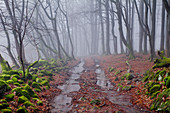 Forest path sourrounded by moos-covered stones, Rhoen Biosphere Reserve, Bavarian Rhoen Nature Park, Bavaria, Germany
