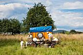 Goats relax on wagon alongside field, Sommerkahl, near Schoellkrippen, Kahlgrund, Spessart-Mainland, Bavaria, Germany