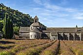 Lavendelfeld vor der Abbaye des Senanque bei Gordes, Vaucluse, Provence, Frankreich